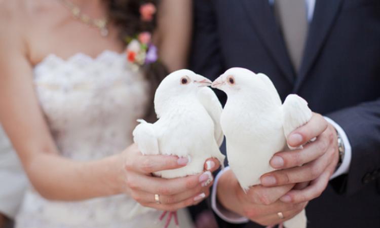 Картинки по запросу Регистрация брака с гражданином Германии